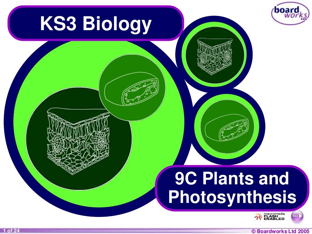 9 C Plants Amp Photosynthesis Boardworks By Preeti Ghosh