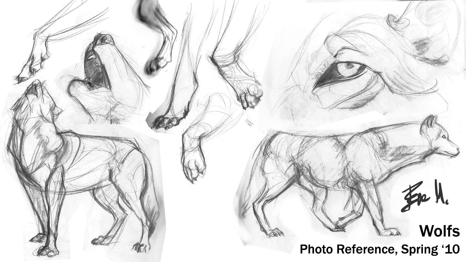 Image result for wolf anatomy | anatomy/drawing help | Pinterest ...
