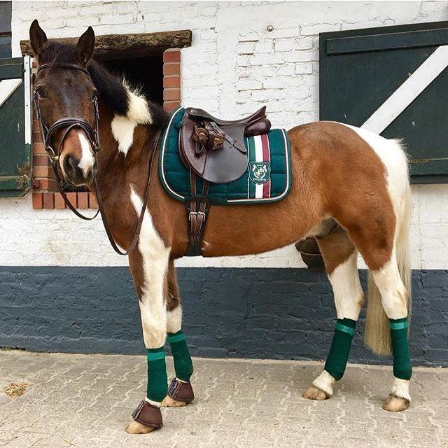 Das Pony Von At Moemara Trägt Die Eskadron Heritage Bs In Racinggreen