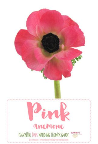Essential pink wedding flowers guide names seasons pics flower essential pink wedding flowers guide names seasons pics flower dictionary flower names pictures and seasons pinterest wedding flowers flowers mightylinksfo