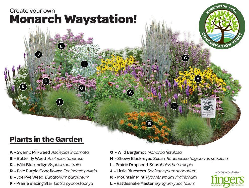 Help Save The Monarchs Ringers Landscape Services Inc Butterfly Garden Design Butterfly Garden Plants