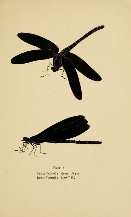 nemfrog:  Plate 3. Dragonflies. _A Japanese miscellany_ 1919