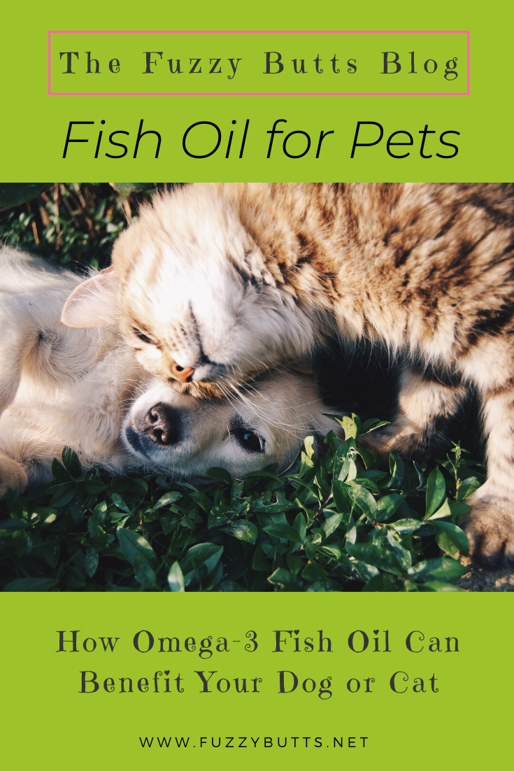 Omega 3 Fish Oil How Can It Benefit Your Dog Or Cat In 2020 Pets Dog Cat Your Dog