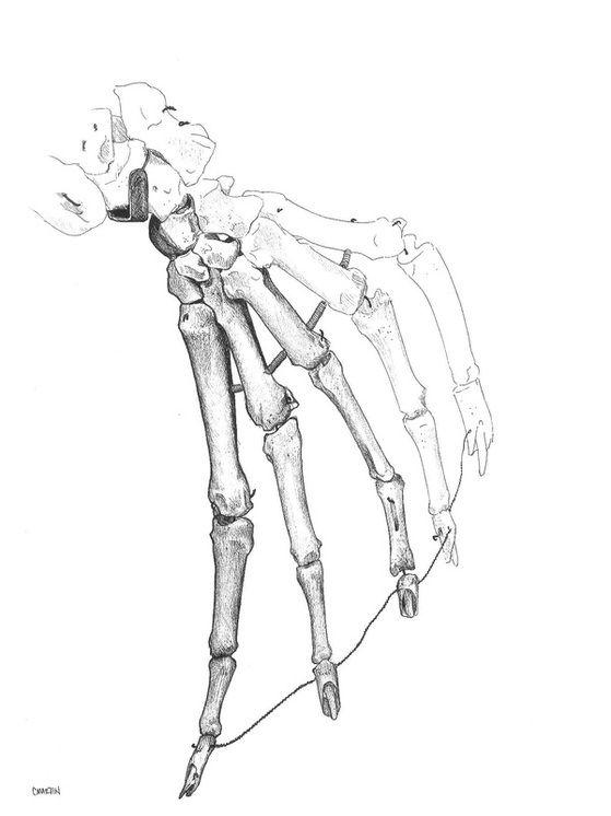 sea lion hand | Anatomy | Pinterest | Anatomy