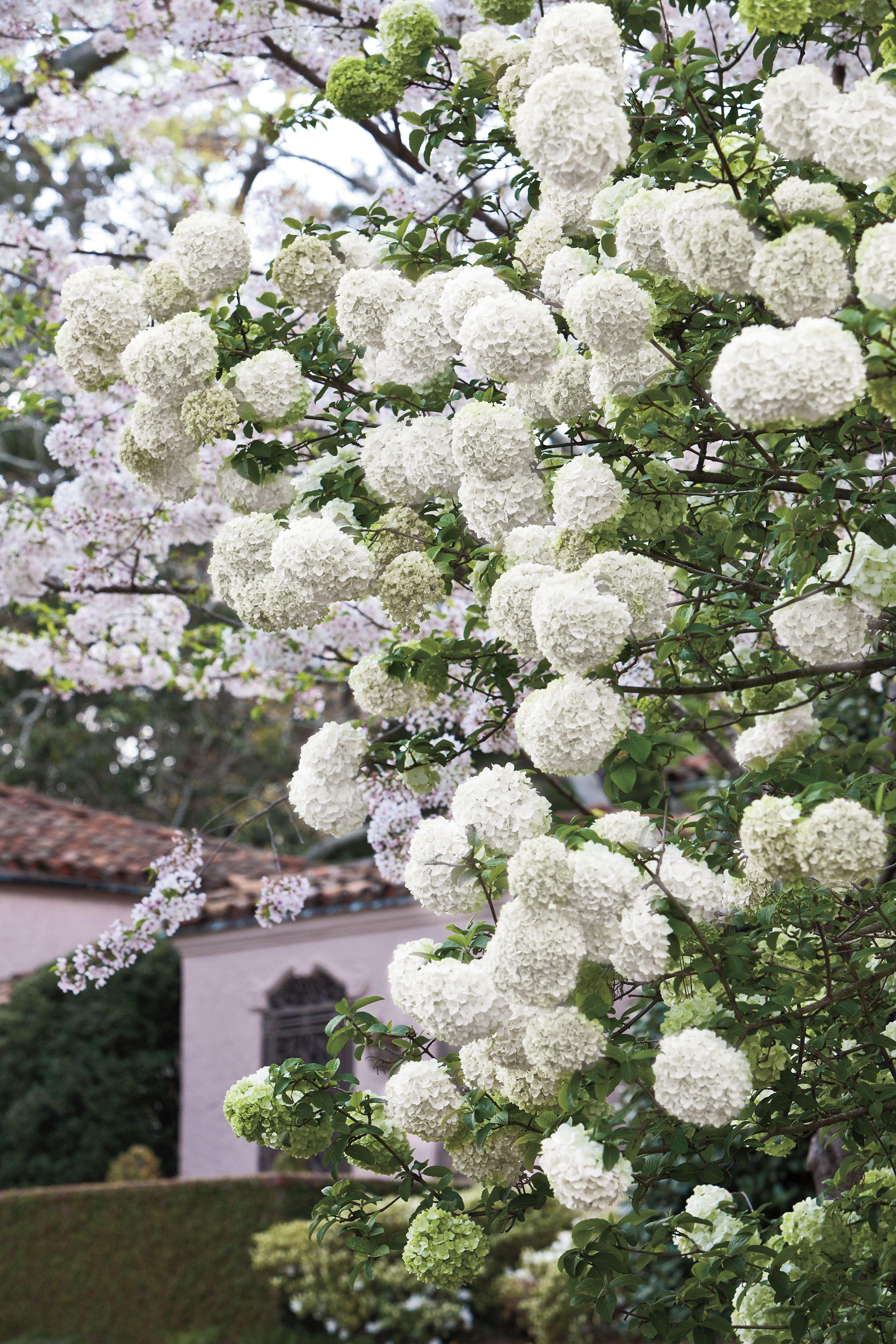 Grow Blooming Shrubs Lakehouse Pinterest Shrub Planting And
