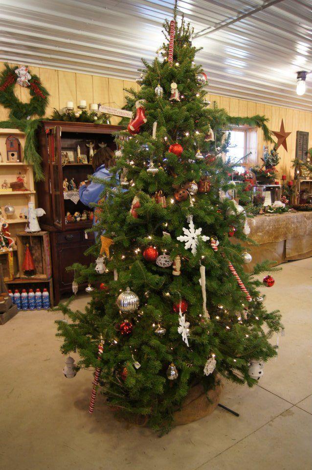 Sickels Tree Farm Holiday Decor Tree Farms Christmas Tree