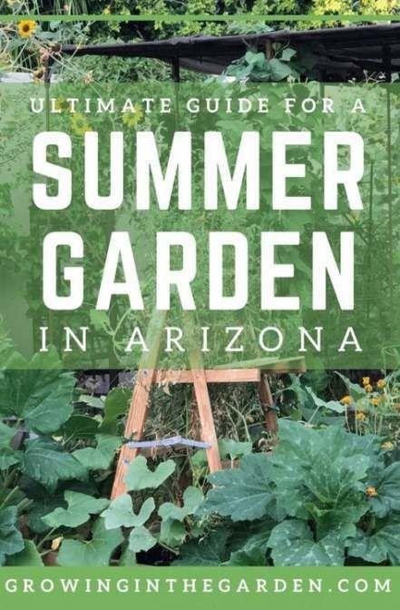 Backyard garden ideas arizona 48+ Ideas #garden #backyard ...