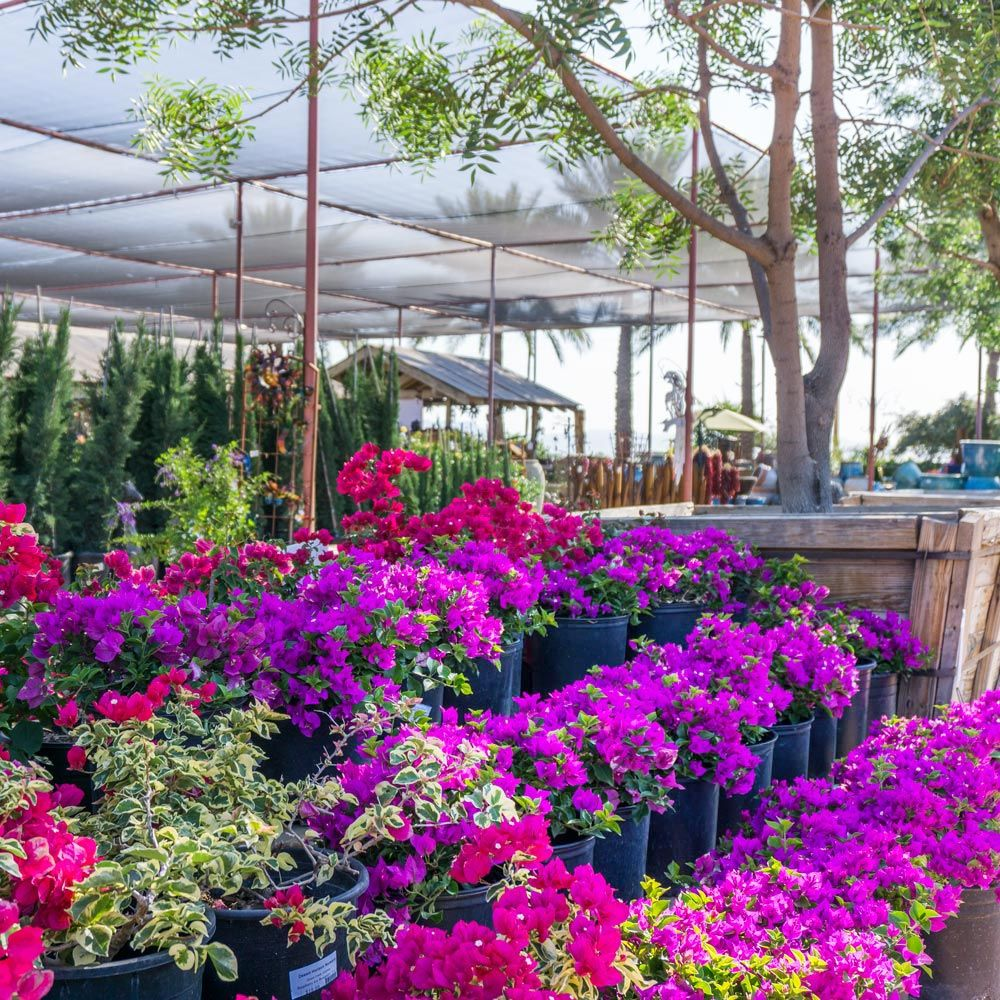 Look For Your Local Nurseries Where Staff Can Provide A Wide Range