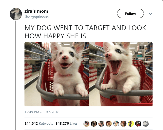 16 Animal Tweets That Made Us Laugh This Week (January 8th, 2018)