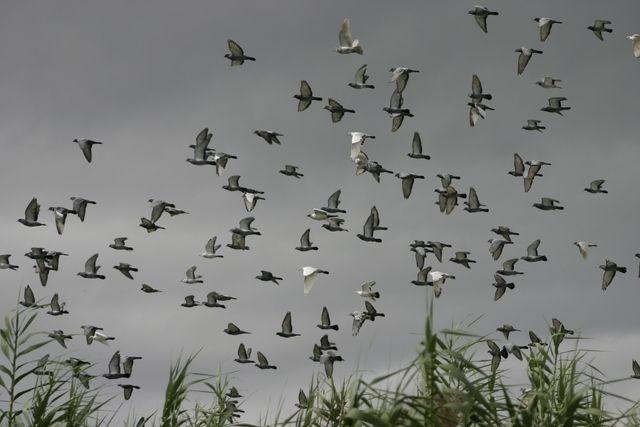 How To Keep Pigeons Off Your Roof Ehow Pigeon Pigeon Repellent Bird Repellents