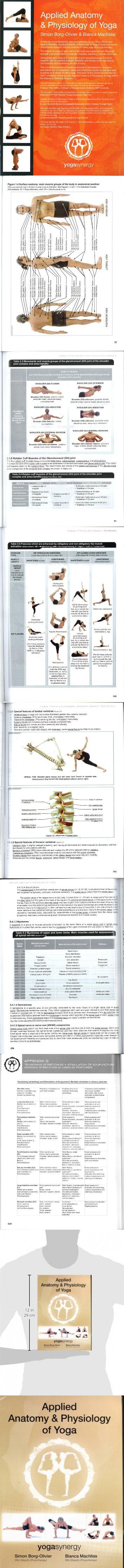 Dorable Anatomy And Physiology Of Yoga Model - Anatomy and ...