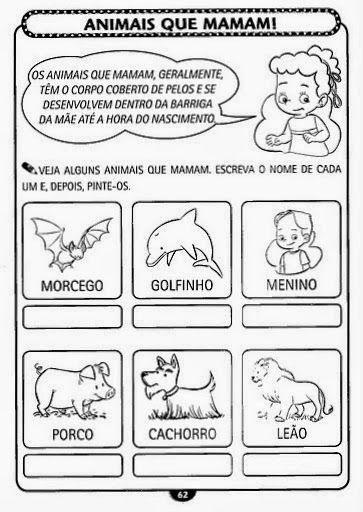 Pin Em Album De Animais