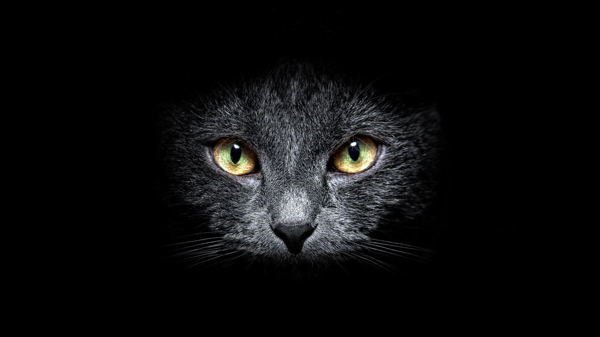 Pin By نور الفجر On Fluff N Stuff Cats Crazy Cats Black Cat