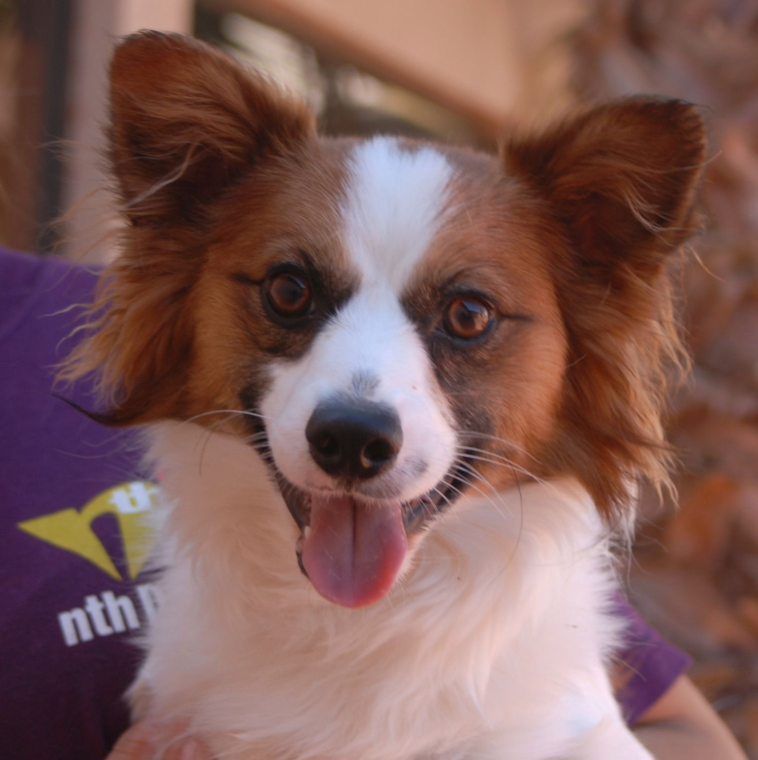 Maximus, a jovial junior puppy with an amazing smile