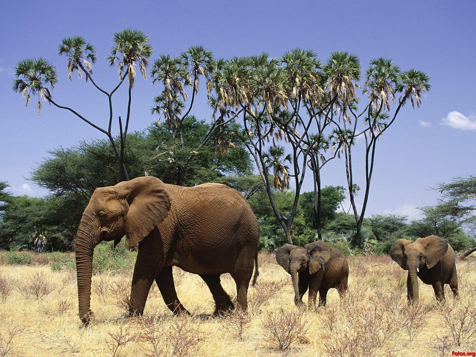 Un paseo por la selva | Los elefantes de Sal Elefante | Pinterest ...
