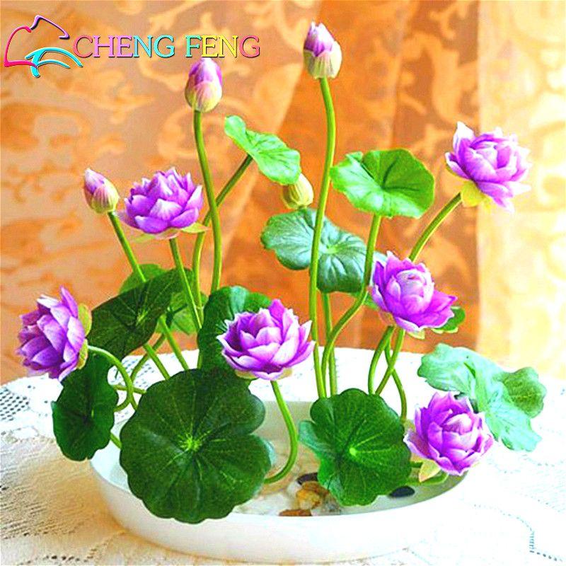 Semi di loto, semi del giglio di acqua di loto, giglio di acqua di fiori, 10 particella/pack semi di loto Ciotola