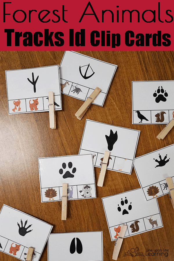 Woodland Animals and Temperate Forest Habitats Unit Study Ideas