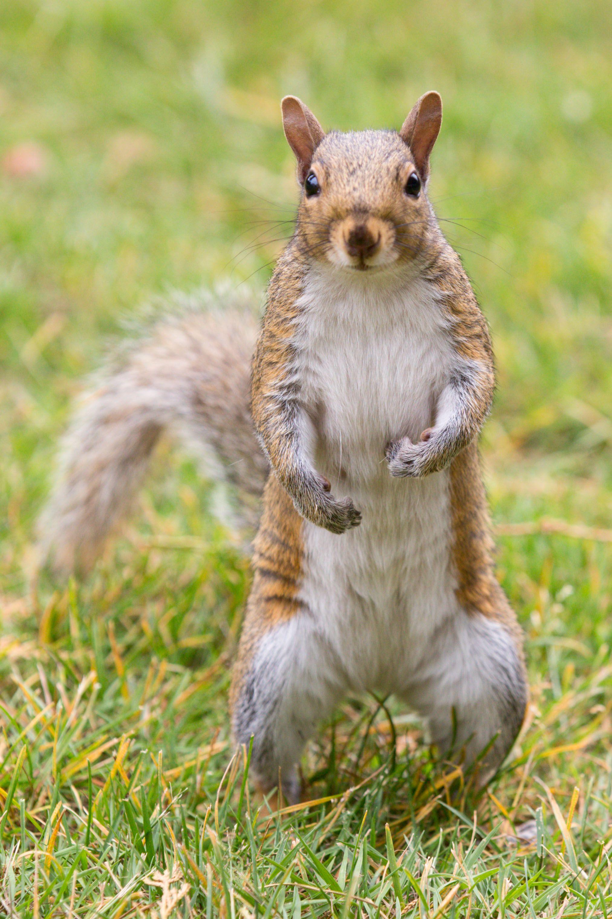 squirrel animals Pinterest Squirrel and Animal