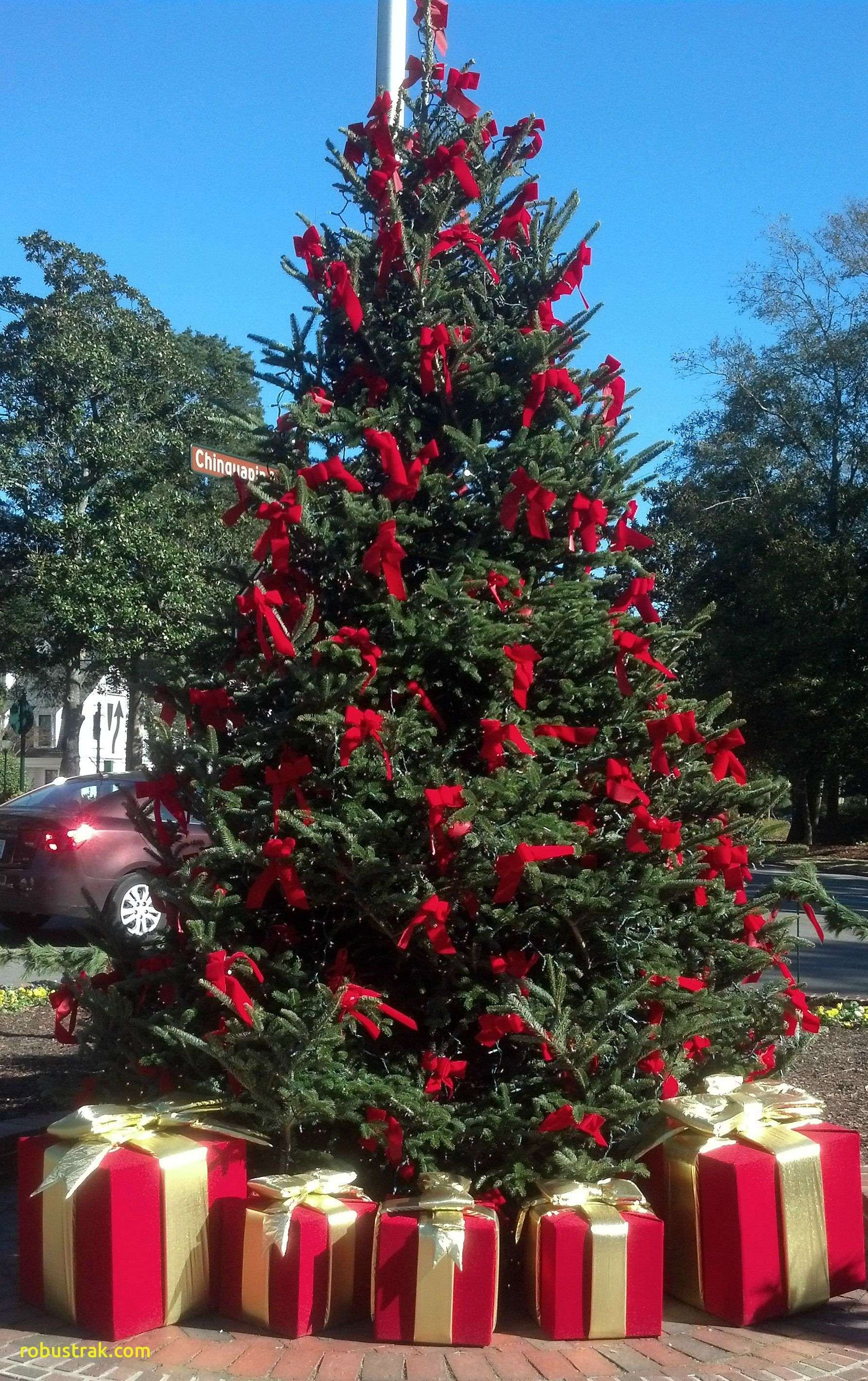 Pinehurst Nc The Christmas Tree In The Village 2013 On
