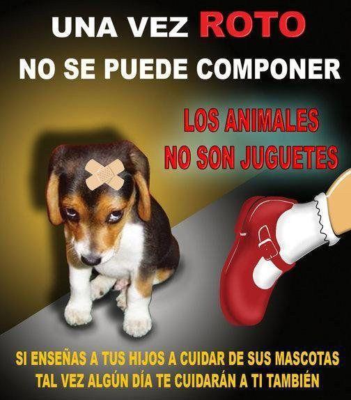 Pin De Luna Trece En Mascotas Regalo Perro Perros Navidad Y