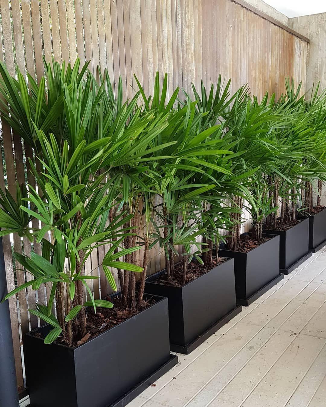 Palmeira Ráfia: Significado, Cuidados e 25 Ideias de Decoração
