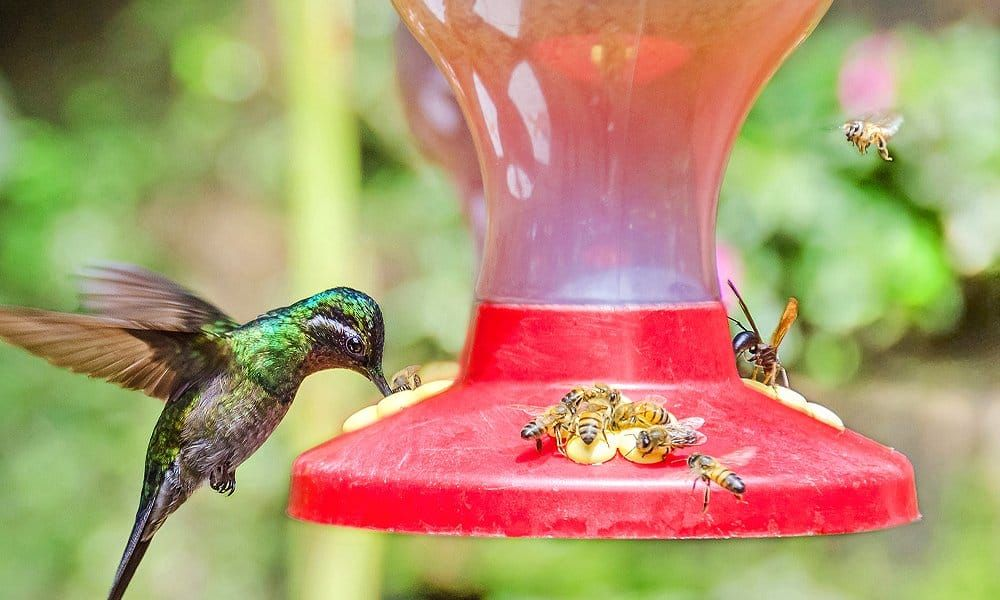 Pin by Beth McMichen on yard in 2020 Humming bird