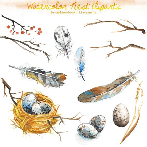 Watercolor Nest and Feather  digital printable by Scrapstorybook