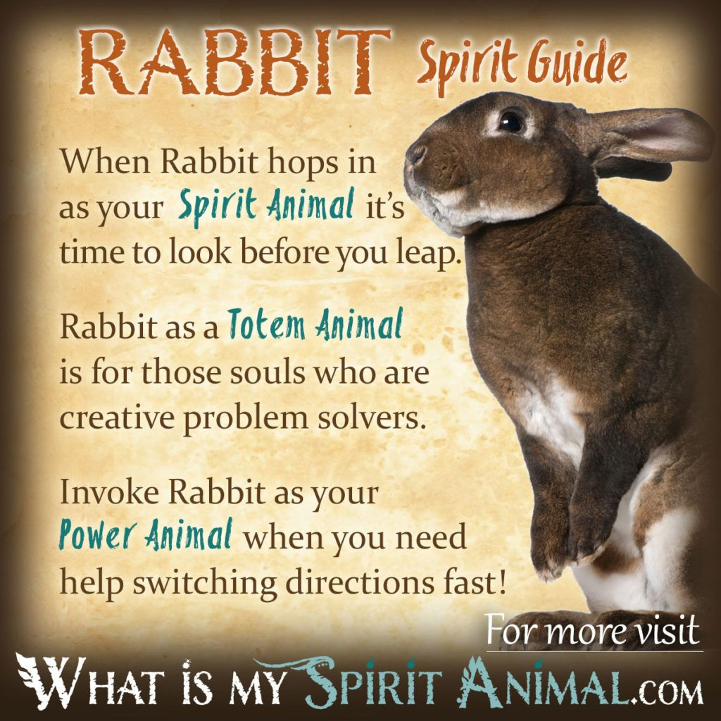 Animal Guide: Power Animal, Totems And Rabbit