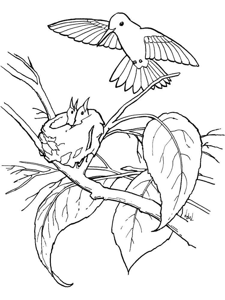 Hummingbird Coloring Pages Finished Hummingbirds Are Tiny Birds That Are Good At Flying And Are Animal Coloring Pages Bird Coloring Pages Hummingbird Drawing