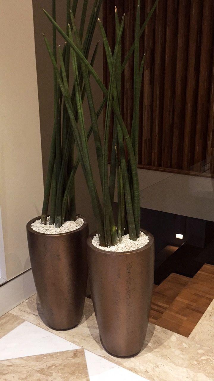 Vasos de aço corten com lança de São Jorge #paisagismo