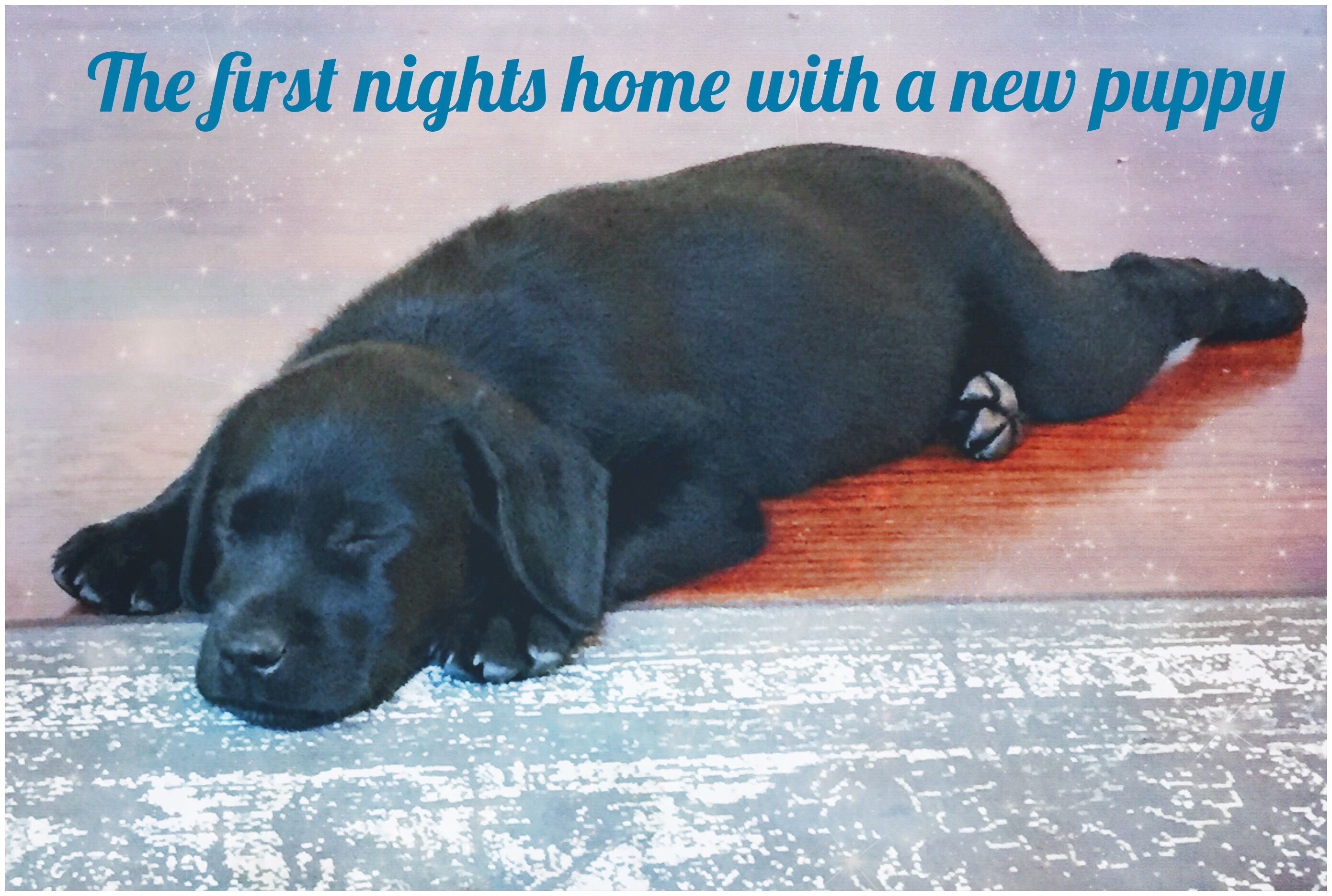 The first nights home with a new puppy First night with