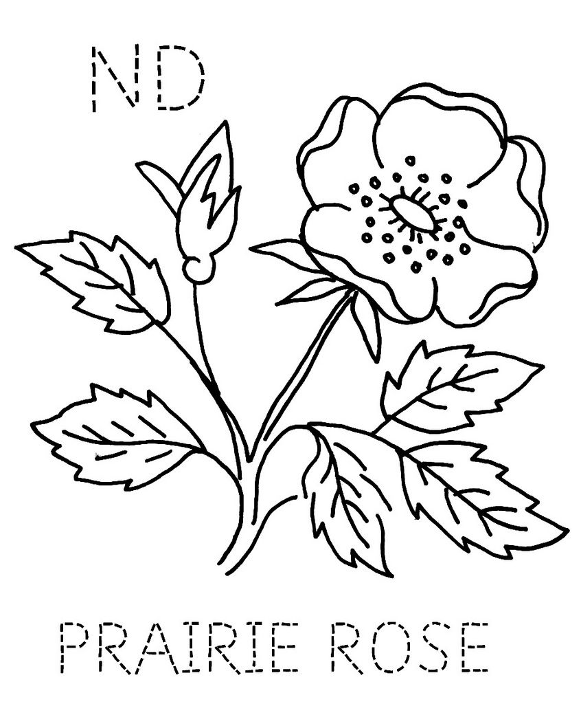 North Prairie Rose | Menu, Action and Drop