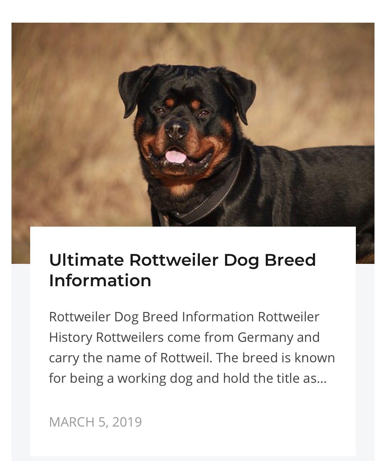 Ultimate Rottweiler Dog Breed Information Rottweiler Dog Breed Rottweiler Dog Rottweiler