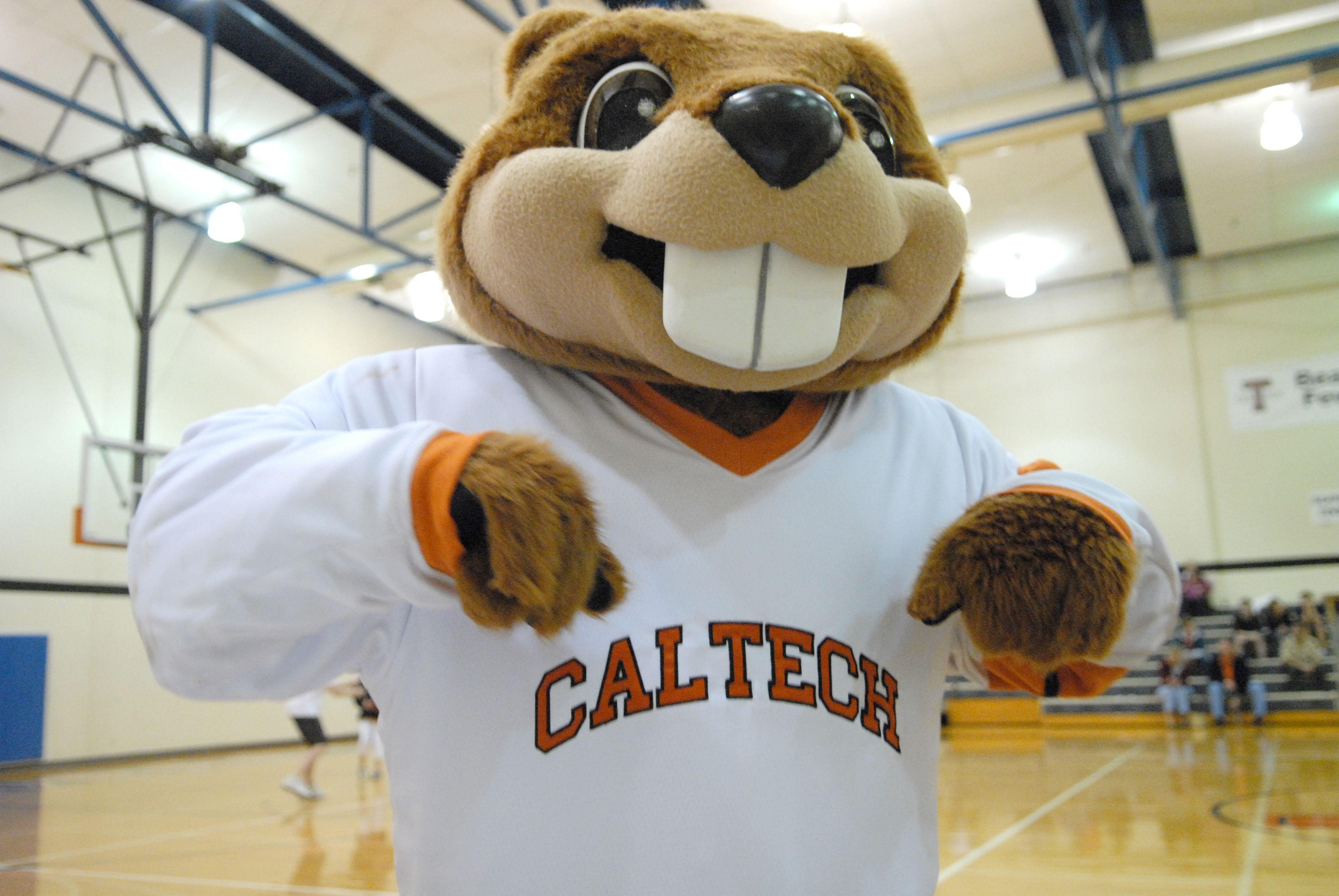 Beaver, California Institute of Technology   Caltech   Pinterest