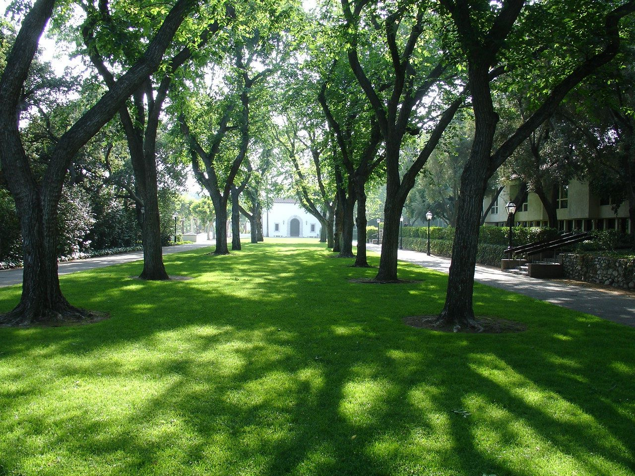 Elm Tree Lawn Scripps College Where A Piece Of My Heart Will