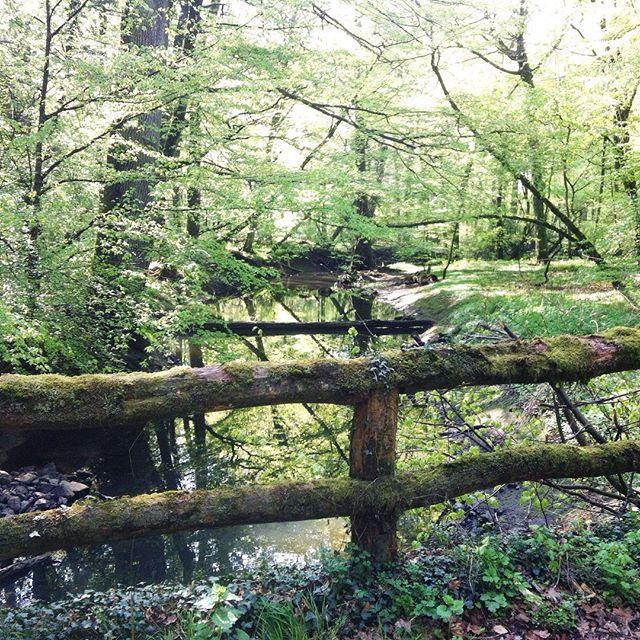A little Walk in the Woods #walkinthewoods #haveaniceday #spring2017 #bulau #oldbridges #suninthetrees #greenlight