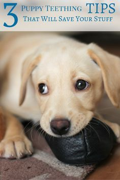 3 Puppy Teething Tips That Will Save Your Stuff Puppies Puppy Teething Puppy Time