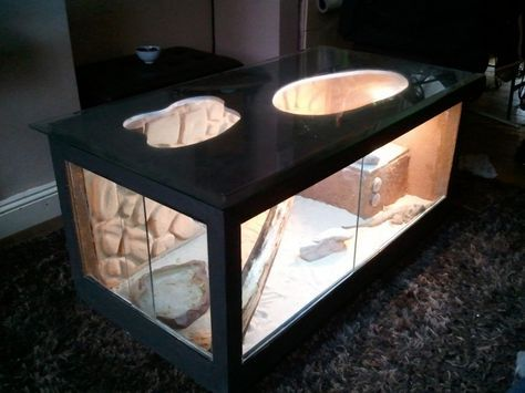 Perfect Bearded Dragon Coffee Table   Reptile Forums