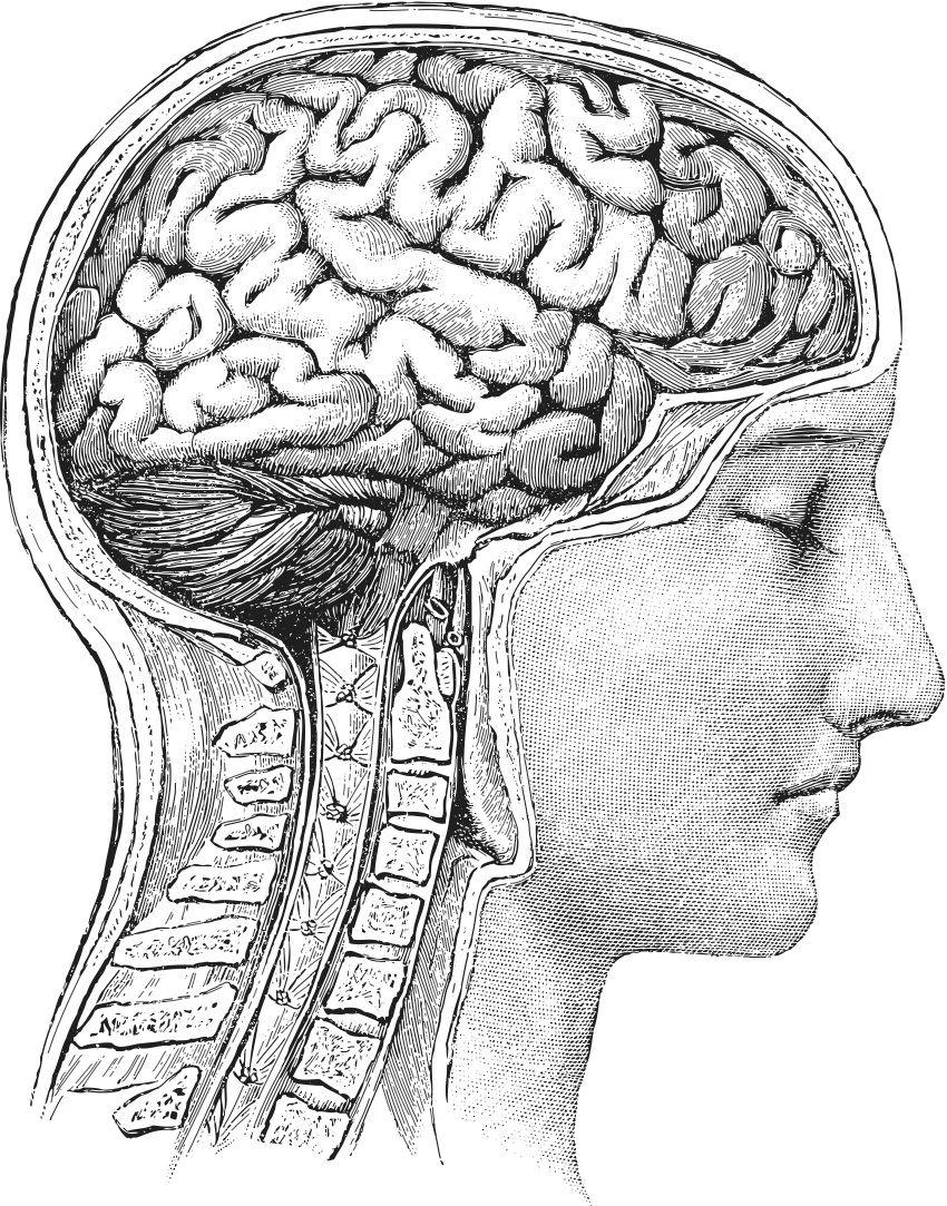 Pin von Cecilia Rossiter auf Brain | Pinterest | Menschlicher körper ...