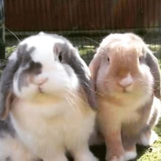 Barks Bunnies Online Pet Shop Uk For Dogs Rabbits Easy Ordering Dog Temperature Dog Cooling Coat Pet Shop