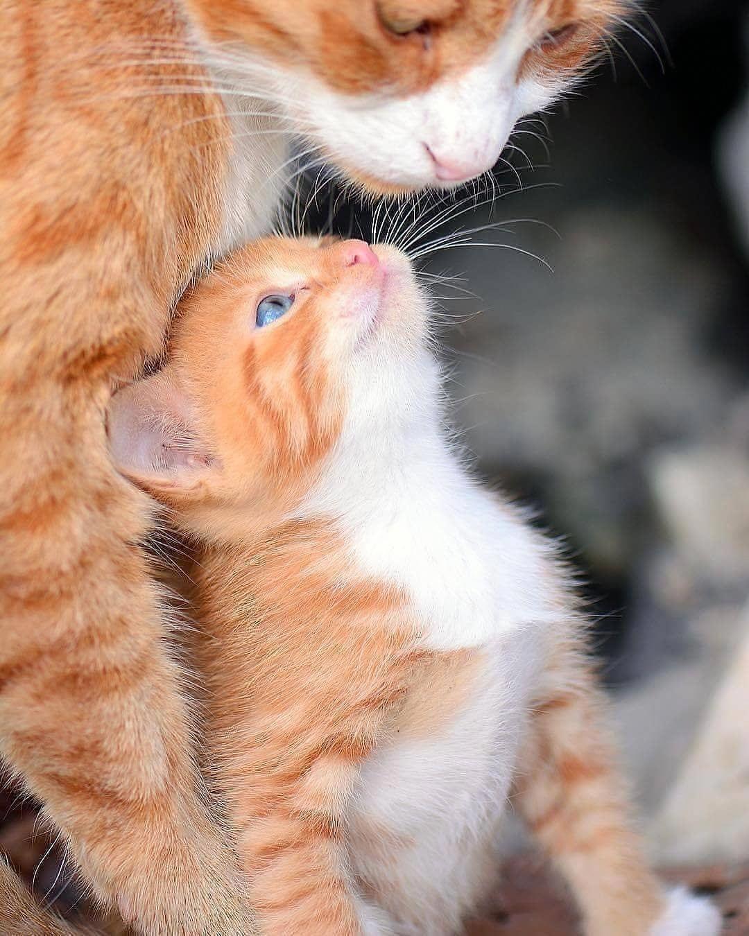 b9695461babf1f5874c180edc956a3bd - How To Get A Wild Kitten To Trust You