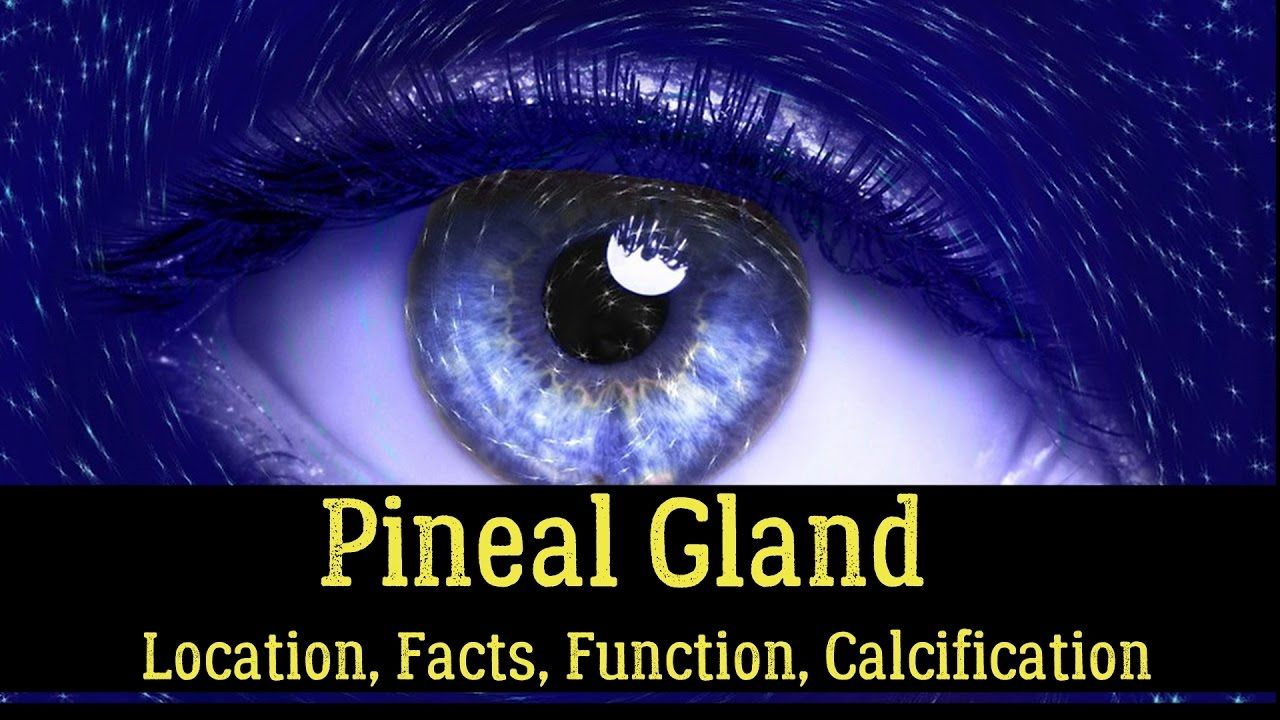 Pineal Gland Location Facts Function Calcification Cyst