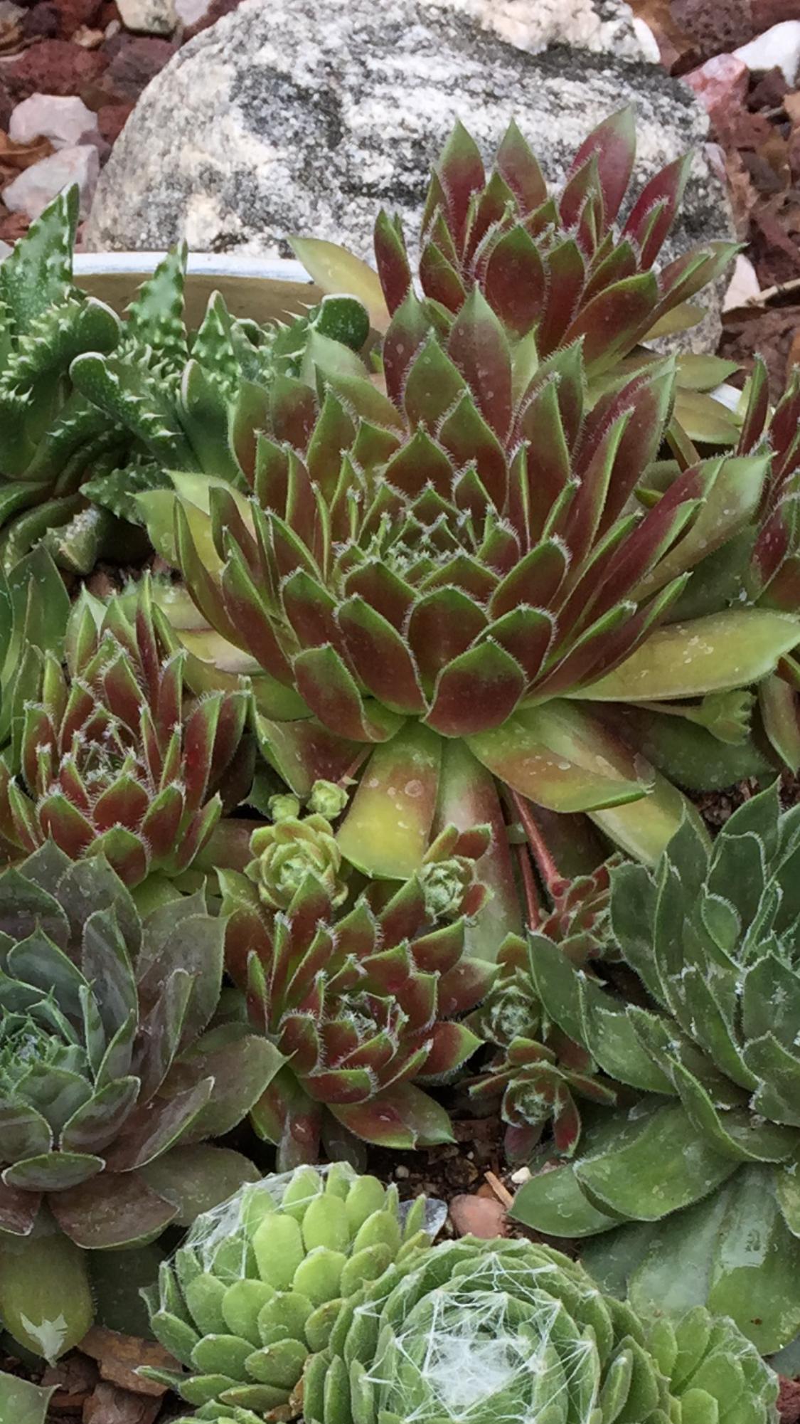 Pin by Melanie on Succulent planters | Pinterest | Cacti, Succulents ...