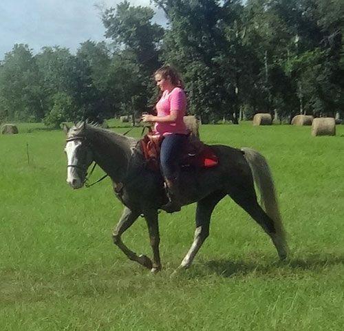 Tennessee Walking Horses -- CLOUD 9 WALKERS - Tennessee