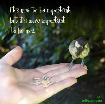 Quotesaboutkindness With Kindness Quotes Beautiful Postcards Best Quotes About Birds