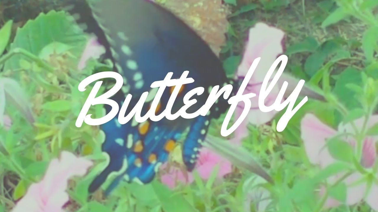Butterfly in Gatlinburg | Impossibilities - Magic, Mindreading and Mayhe...