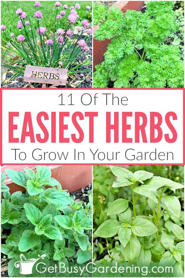 11 Easy Herbs To Grow In Your Garden - Get Busy Gardening