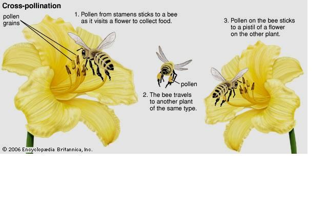 1000 images about pollination on pinterest hummingbirds  : pollination diagram - findchart.co