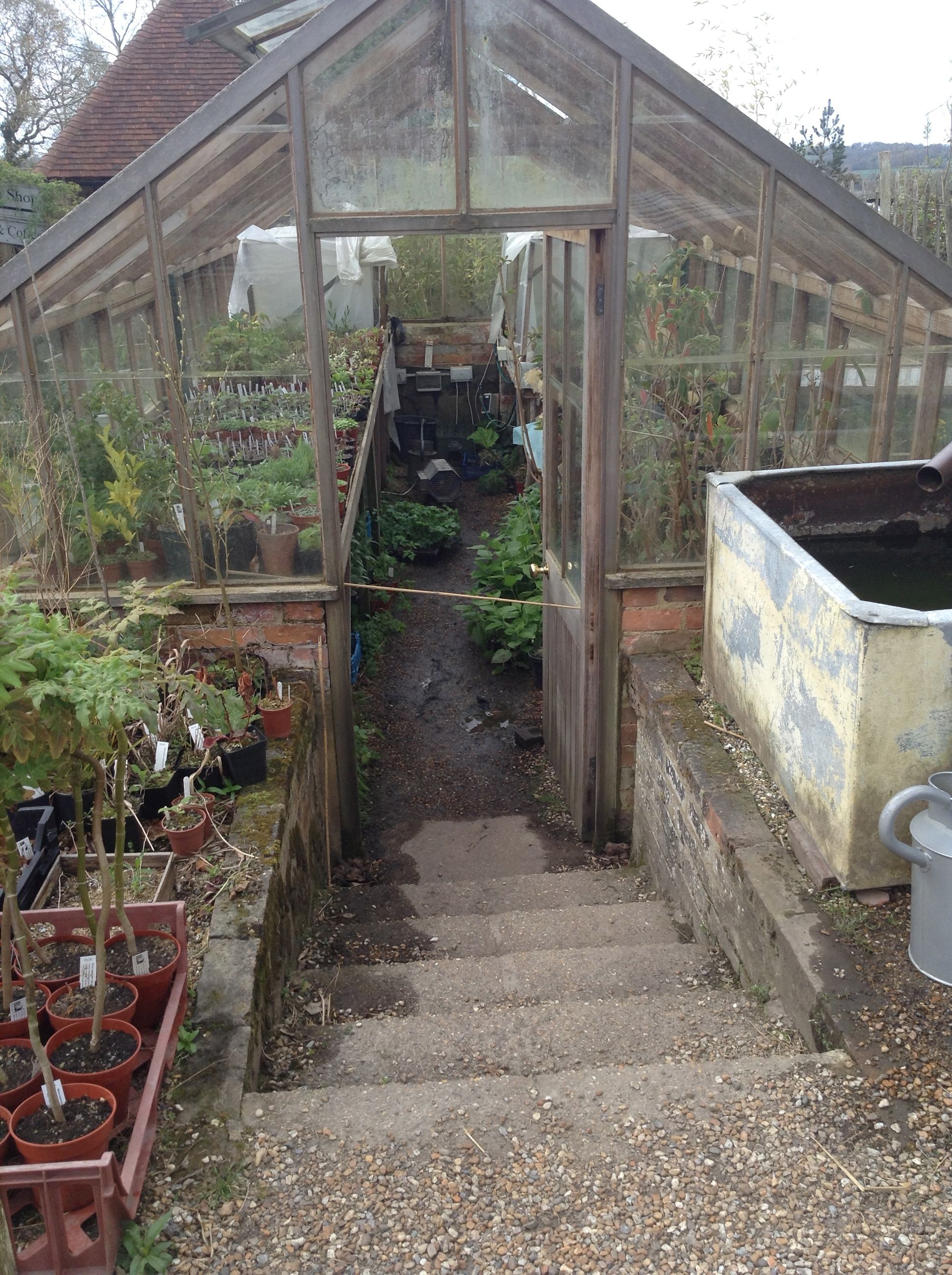 growing of garden review a sam year greenfingers gardening polytunnel greenhouse my in not just