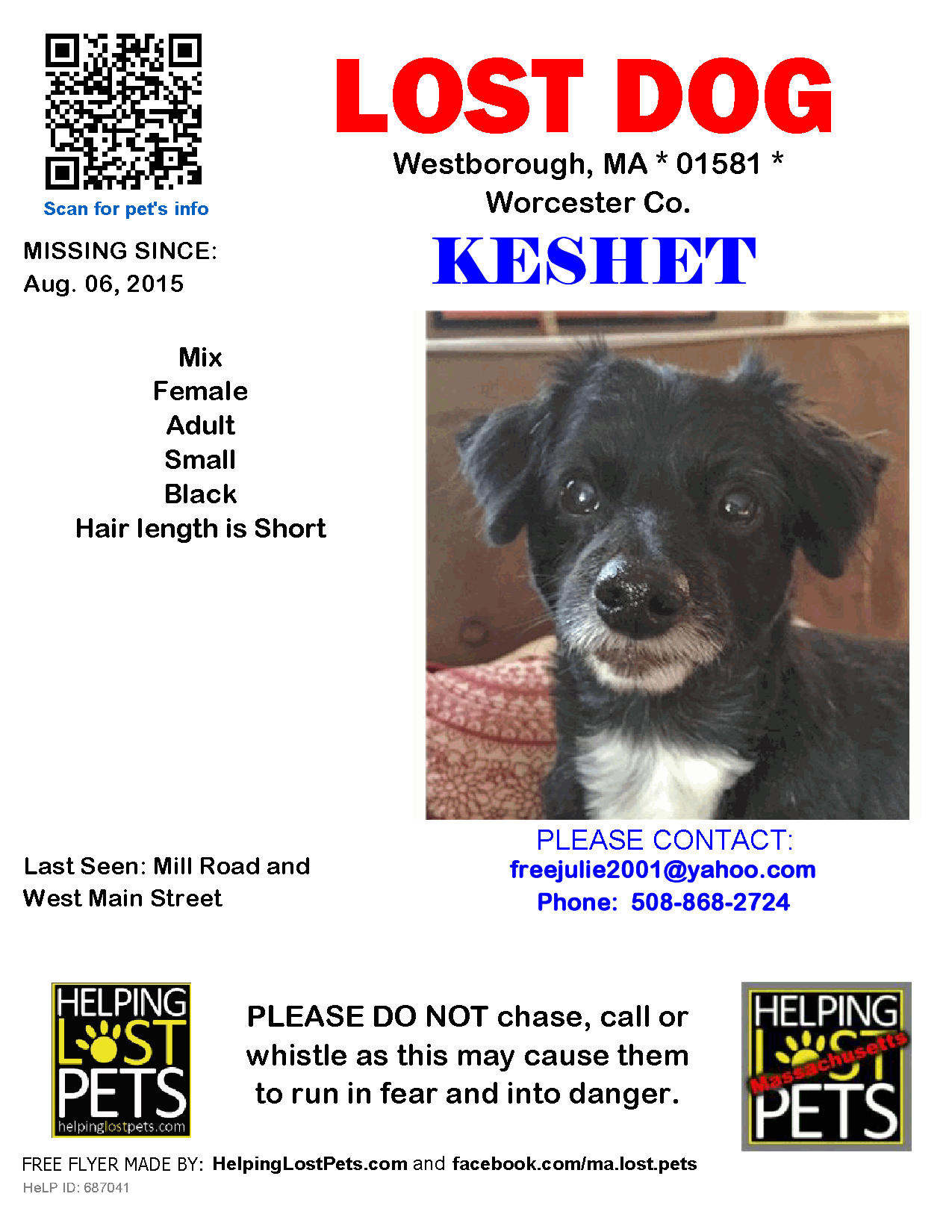 Lost Dog Female Westborough, MA, USA 01581 (With